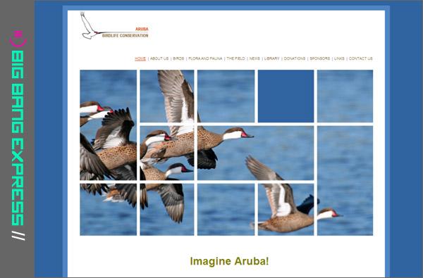 www.arubabirdlifeconservation.com