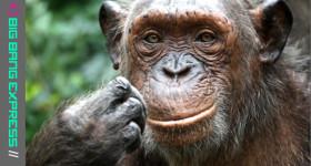 Christels Monkeywayblog
